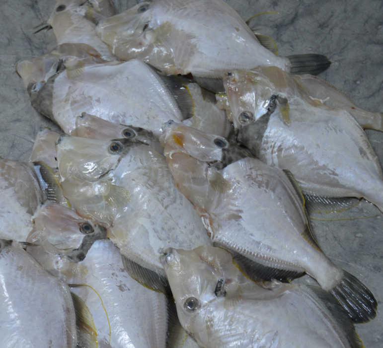 Bahrain Manama Food Market - Donkey Fish