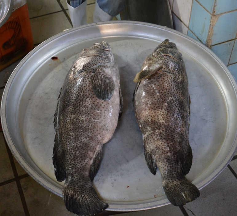Bahrain Manama Food Market - Haour Fish