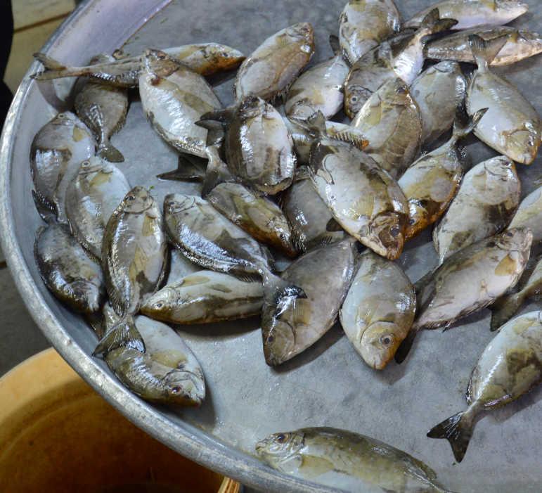 Bahrain Manama Food Market - Safi Fish